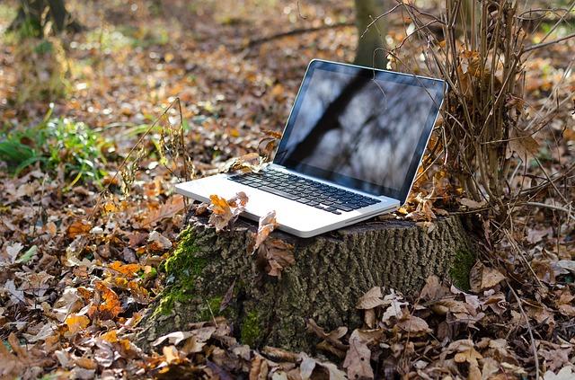 počítač v lese