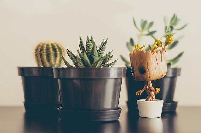 Květináče s kaktusy